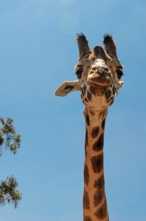 Žirafa centar