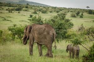 Rezervat Masai Mara
